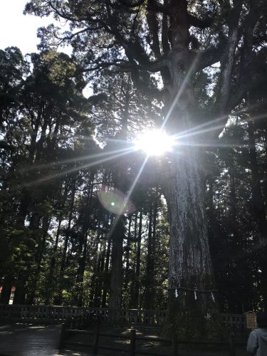 樹齢800年